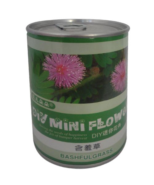 含羞草种子罐